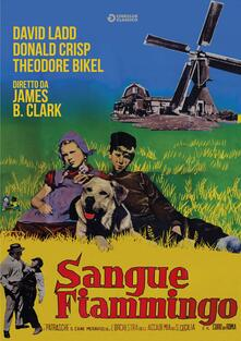 Sangue fiammingo (DVD) di James B. Clark - DVD