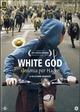 Cover Dvd DVD White God - Sinfonia per Hagen
