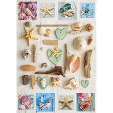 1000 Collage Di Conchiglie