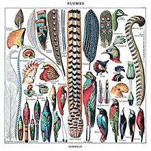 Plumels - Vinile LP di Ginnels