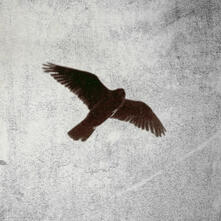 Lesomorie - Vinile LP di Mor