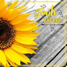 Cartoleria Biglietto d'auguri 3D A Splash of Colour generico. Girasole Panini