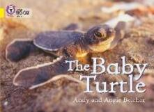 The Baby Turtle: Band 03/Yellow - Andy Belcher,Angie Belcher - cover
