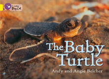The Baby Turtle Workbook - cover
