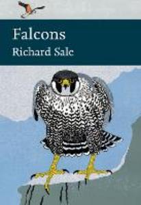Ebook in inglese Falcons Sale, Richard