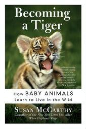 Becoming a Tiger