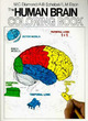 The Human Brain Coloring