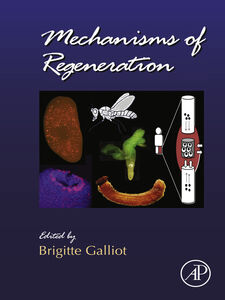 Ebook in inglese Mechanisms of Regeneration -, -