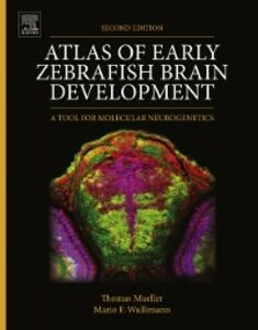 Ebook in inglese Atlas of Early Zebrafish Brain Development Mueller, Dr. Thomas , Wullimann, Mario