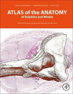 Atlas of the Anatomy of Dolphins and Whales - Bruno Cozzi,Helmut Oelschlager,Steinhausen - cover