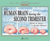 Human Brain During the Second Trimester