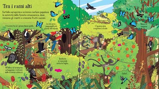 La giungla. Libri animati - Minna Lacey,Brendan Lacey - 2
