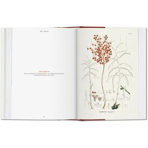 C. F. P. von Martius. The book of palms. Ediz. italiana, spagnola e portoghese - H. Walter Lack - 3