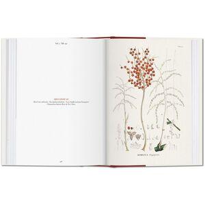 Libro C. F. P. von Martius. The book of palms. Ediz. italiana, spagnola e portoghese H. Walter Lack 2