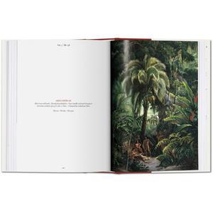 C. F. P. von Martius. The book of palms. Ediz. italiana, spagnola e portoghese - H. Walter Lack - 4
