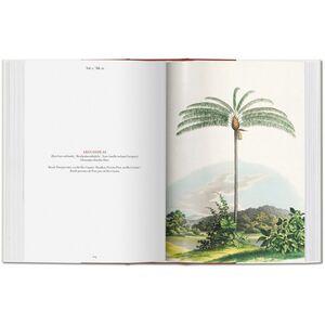 Libro C. F. P. von Martius. The book of palms. Ediz. italiana, spagnola e portoghese H. Walter Lack 6