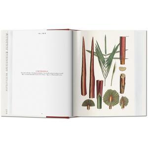 C. F. P. von Martius. The book of palms. Ediz. italiana, spagnola e portoghese - H. Walter Lack - 8