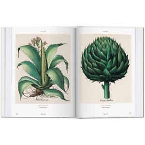 Basilius Besler's florilegium. The book of plants. Ediz. illustrata - Klaus W. Littger,Werner Dressendörfer - 4