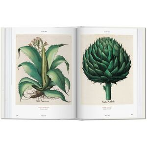 Libro Basilius Besler's florilegium. The book of plants Klaus W. Littger , Werner Dressendörfer 3