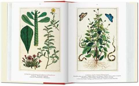 Libro Albertus Seba. Cabinet of natural curiosities. Ediz. italiana, spagnola e portoghese Irmgard Musch , Jes Rust , Rainer Willmann 2