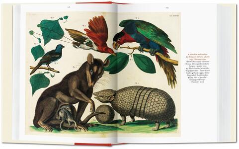Albertus Seba. Cabinet of natural curiosities. Ediz. italiana, spagnola e portoghese - Irmgard Musch,Jes Rust,Rainer Willmann - 4