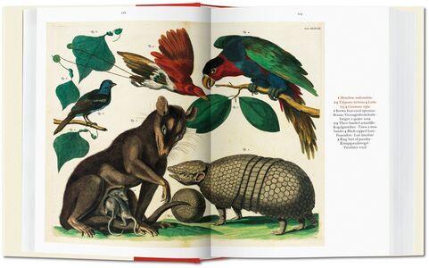 Libro Albertus Seba. Cabinet of natural curiosities. Ediz. italiana, spagnola e portoghese Irmgard Musch , Jes Rust , Rainer Willmann 3