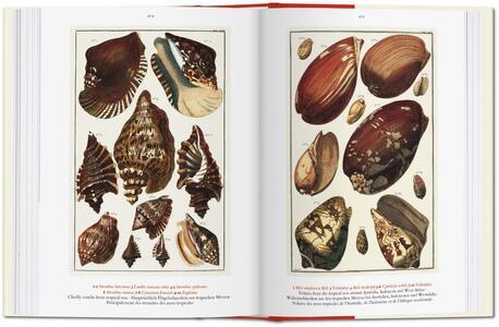 Albertus Seba. Cabinet of natural curiosities. Ediz. italiana, spagnola e portoghese - Irmgard Musch,Jes Rust,Rainer Willmann - 6