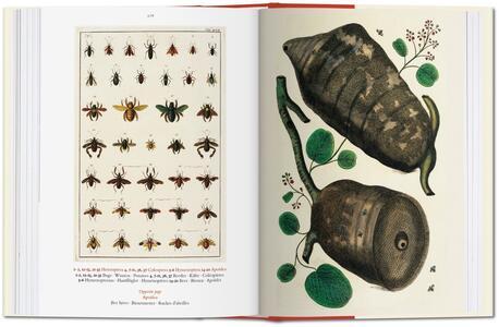 Albertus Seba. Cabinet of natural curiosities. Ediz. italiana, spagnola e portoghese - Irmgard Musch,Jes Rust,Rainer Willmann - 7