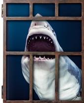 Michael Muller. Sharks. Ediz. inglese