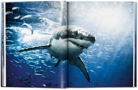 Foto Cover di Michael Muller. Sharks. Ediz. inglese, Libro di AA.VV edito da Taschen 2