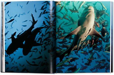 Libro Michael Muller. Sharks. Ediz. inglese Philippe jr. Cousteau , Alison Kock , Arty Nelson 3