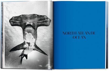 Libro Michael Muller. Sharks. Ediz. inglese Philippe jr. Cousteau , Alison Kock , Arty Nelson 4