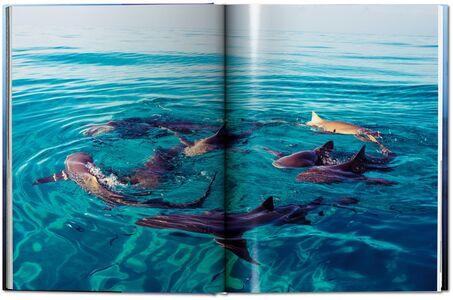 Libro Michael Muller. Sharks. Ediz. inglese Philippe jr. Cousteau , Alison Kock , Arty Nelson 5