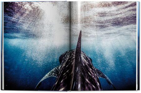 Libro Michael Muller. Sharks. Ediz. inglese Philippe jr. Cousteau , Alison Kock , Arty Nelson 6
