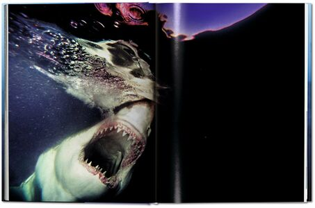 Libro Michael Muller. Sharks. Ediz. inglese Philippe jr. Cousteau , Alison Kock , Arty Nelson 8