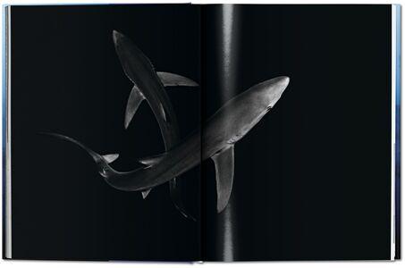 Foto Cover di Michael Muller. Sharks. Ediz. inglese, Libro di AA.VV edito da Taschen 9