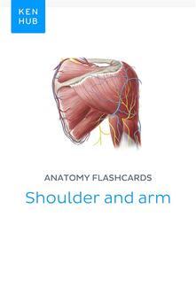 Anatomy Flashcards: Shoulder & Arm