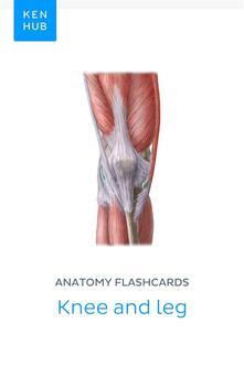 Anatomy flashcards: Knee and leg