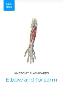 Anatomy flashcards: Elbow and forearm