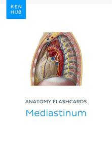 Anatomy flashcards: Mediastinum