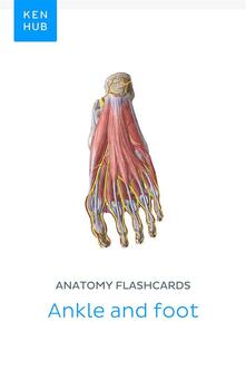 Anatomy flashcards: Ankle and foot