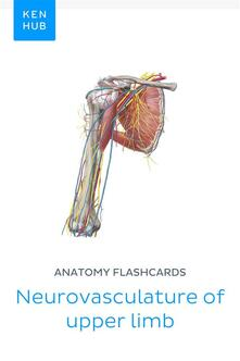 Anatomy flashcards: Neurovasculature of upper limb