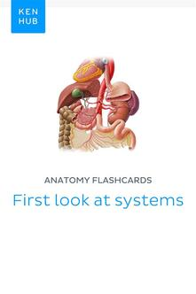 Anatomy flashcards: First look at systems