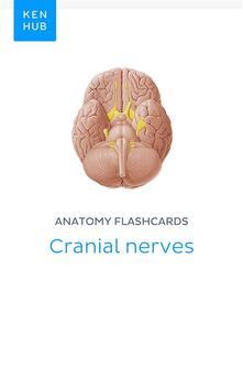 Anatomy flashcards: Cranial nerves