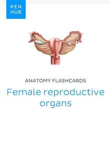 Anatomy flashcards: Female reproductive organs