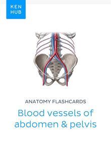 Anatomy flashcards: Blood vessels of abdomen & pelvis