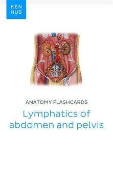 Anatomy flashcards: Lymphatics of abdomen and pelvis