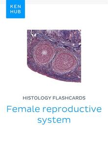Histology flashcards: Female reproductive system