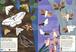 Libro Farfalle del mondo. Il mio albo della natura. Con adesivi Olivia Cosneau 3