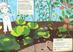 Libro I colori dell'orto. Il mio albo della natura. Con adesivi Olivia Cosneau 4